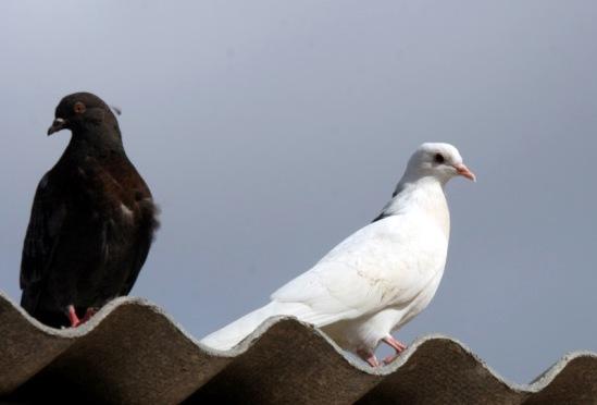 Птица разная 114108--36118134-m549x500-u5034f