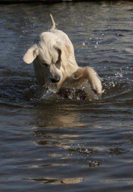 Девчонка научилась плавать и нырять!  А у нас вагон новостей.  Сначала к нам в гости приезжала малышка Фенечка.
