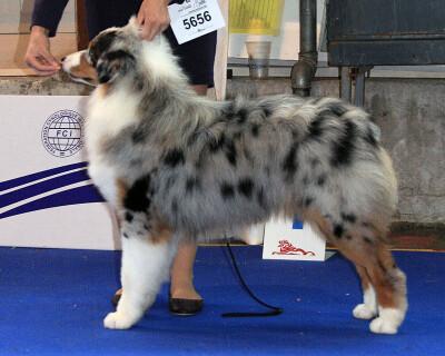 Crufts Dog Show - Страница 2 130053--36677613-400