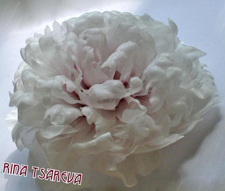 Цветущий комнатный цветок для темной