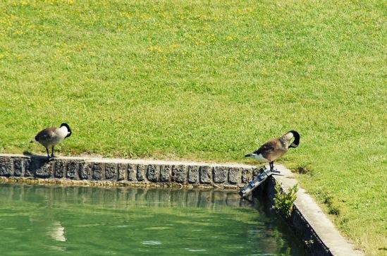 Франция, окрестности Парижа. Марли-ле-Руа. Птицы в парке.