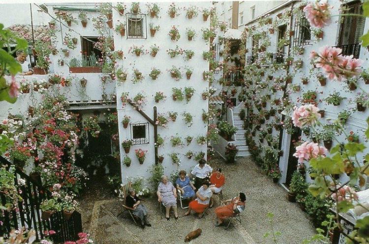 Вьющийся гиацинт с листьев комнатных