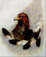 предпросмотр. таблица цветов. evgenya167.  Размеры: 154 x 190 крестов Картинки.  Автор схемы.  0. оригинал.